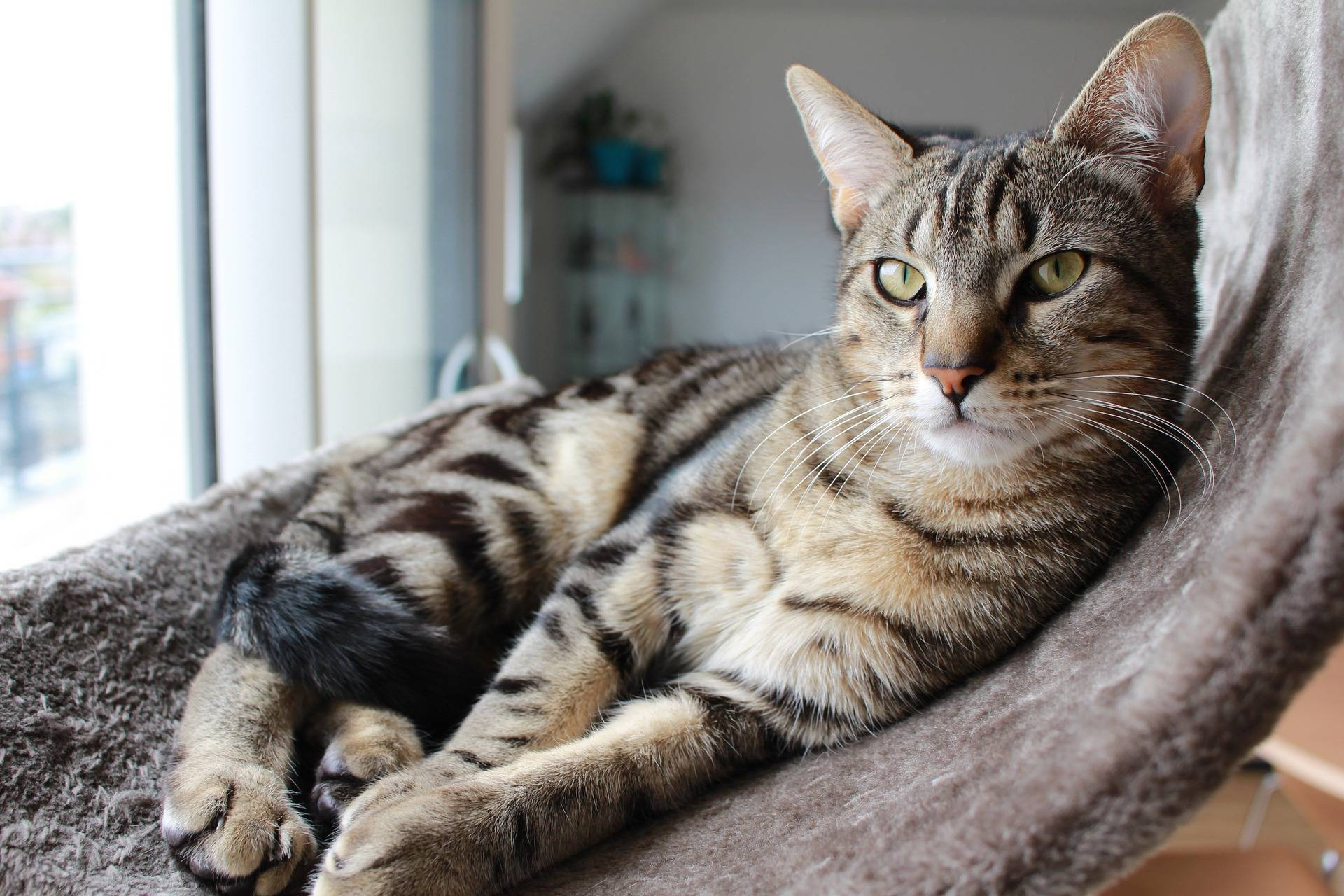 7 Ways to Create a Purrfect Home for Your cat!
