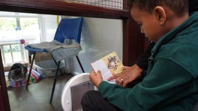 Children from Wendell Park primary school reading to the cats in Mayhew's care