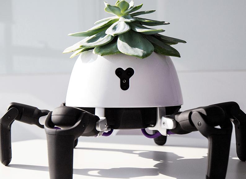 Hexa Mehrzweckroboter mit Pflanze