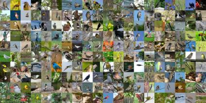 Caltech-UCSD Birds 200