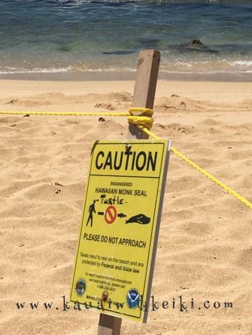 Caution: Hawaiian Monk Seal
