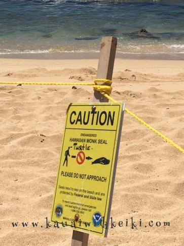 Caution: Hawaiian Monk Seal
