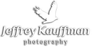 KAUFFMAN'S PHOTOGRAPHY