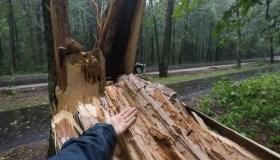 Kleboniškio miškas