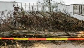 Prie S. Dariaus ir S. Girėno stadiono nupjauti medžiai