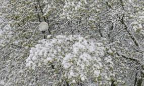 Sniegas gegužės vidury
