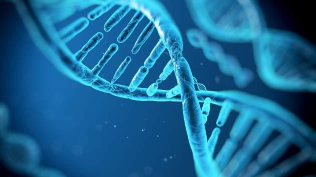 DNR tyrimai