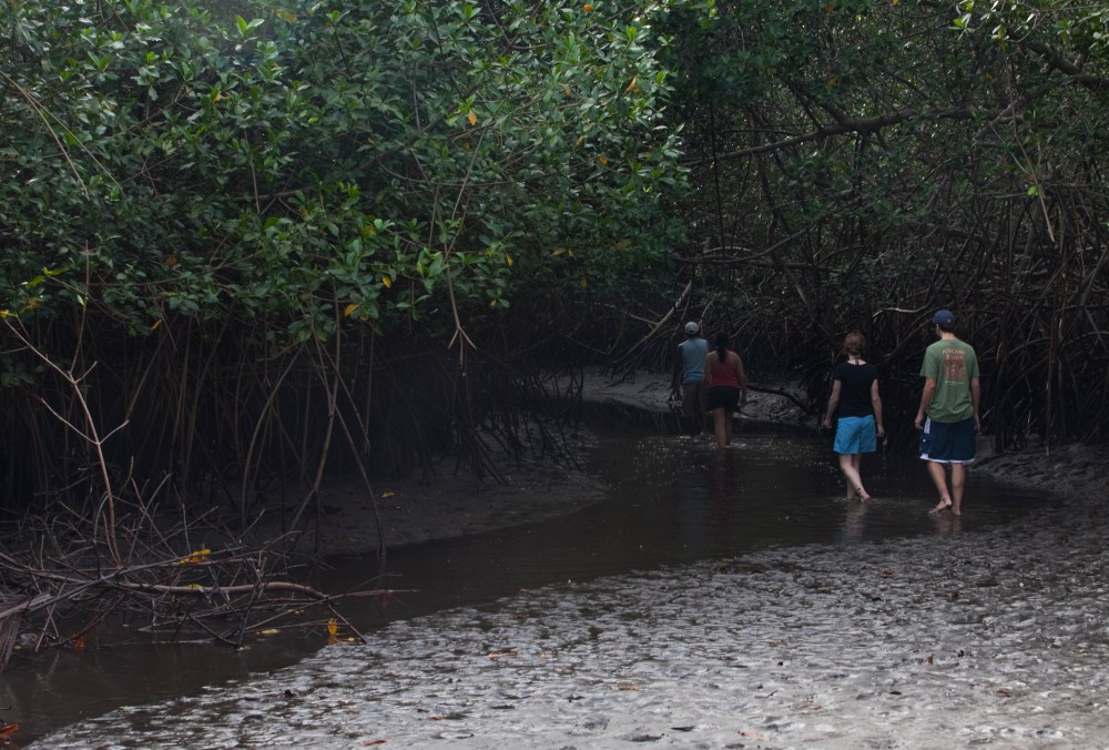 The Mangroves (4/6)
