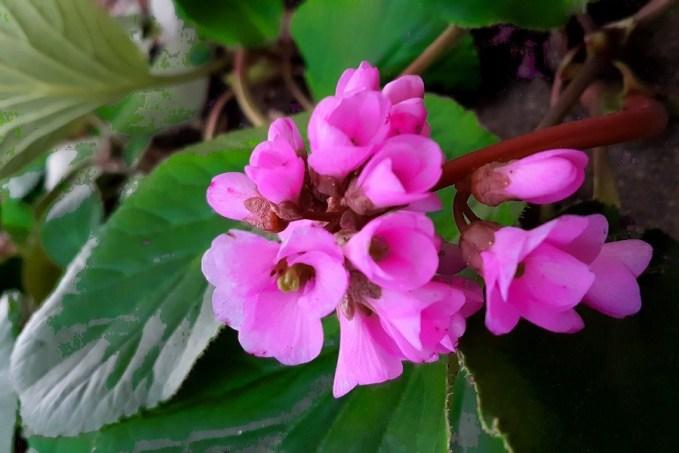 Virágok fagyban