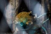 The Deep Sea Diver