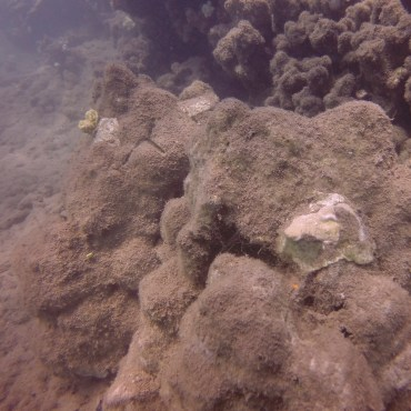 coral replant group