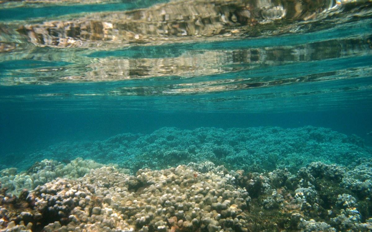 5.13.2014 healthy coral