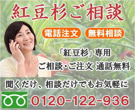 紅豆杉の詳しい情報はこちら