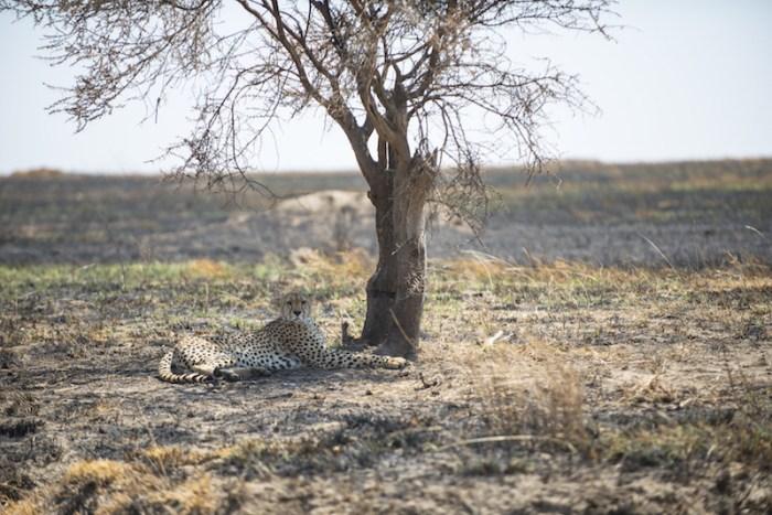 Foto Safári no Serengeti