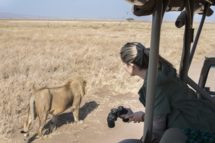 Leão: Safári no Serengeti