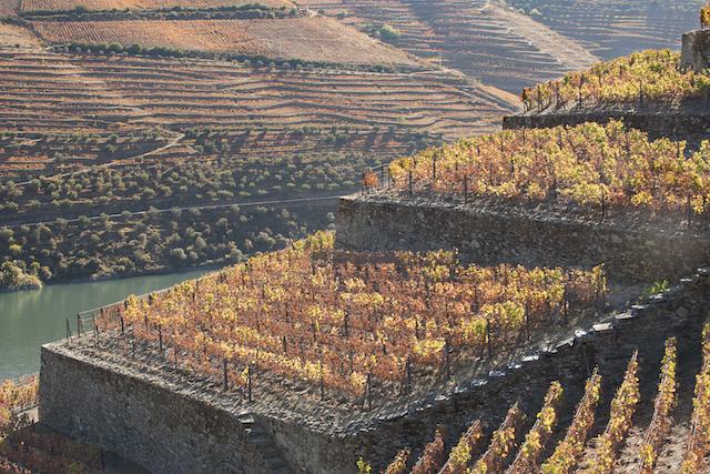 Passeios pelo Douro vinhateiro