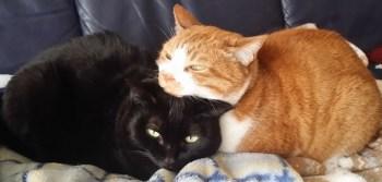 2月22日は「猫の日」!そして「EXILE THE SECONDの日」!