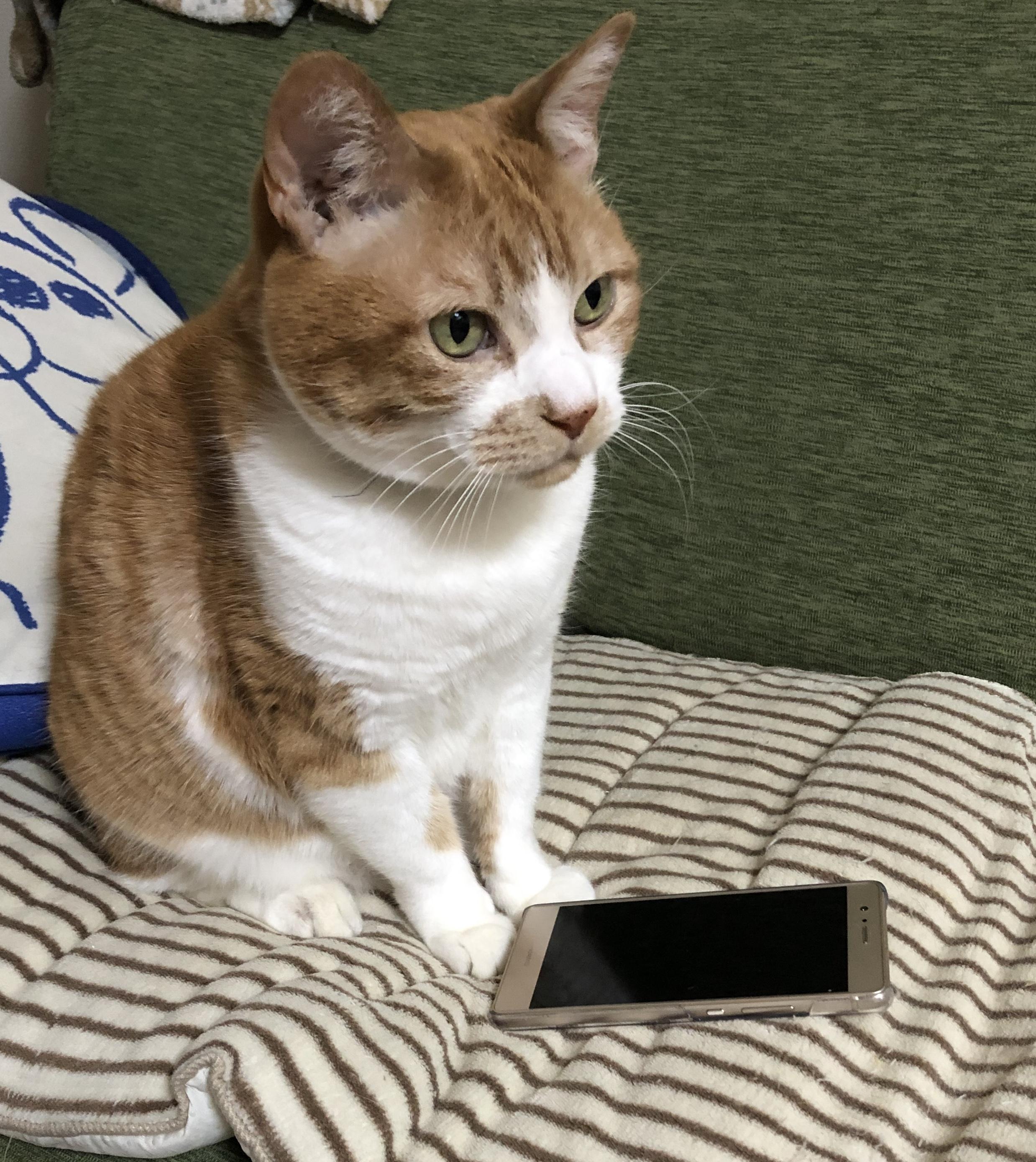 iPhoneから送信予約がしたい