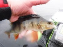 LOMOND PIKE PERCH TROUT LRF 7 (1 of 1)