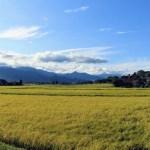 turns 農業 変化