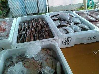 移動販売鮮魚店の魚