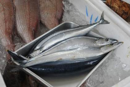 さんま 秋刀魚