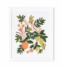 apm003-citrus-floral-01_1