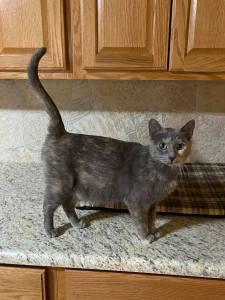 feral cat - mother cat