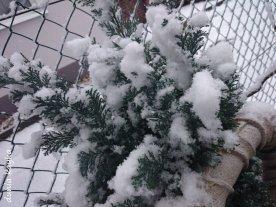 salju hari pertama