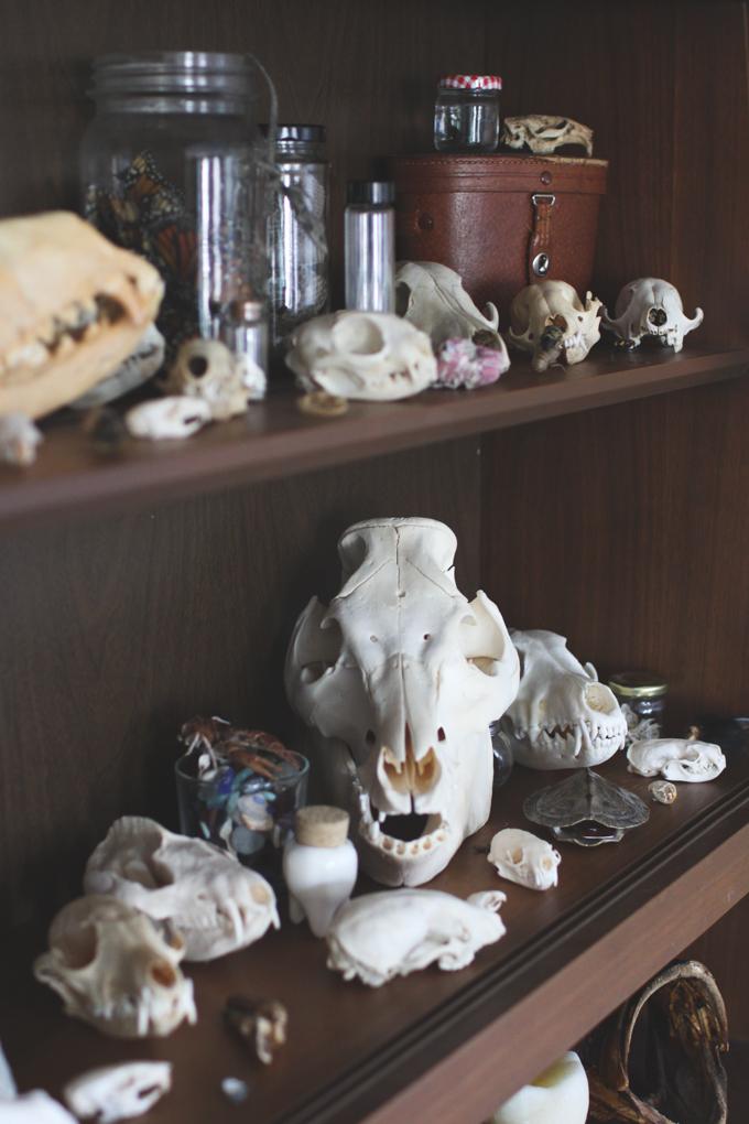 skulls, pig skull, bones