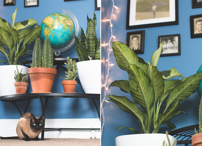 indoor plant stand, house plant, metal plant stand