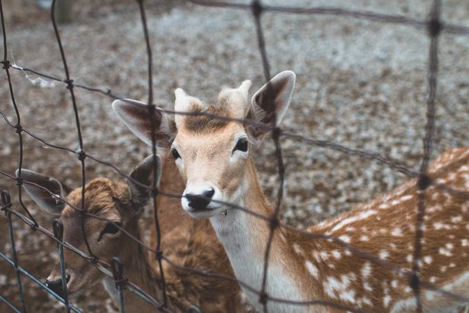 Lagoon Deer Park, Ohio, Sandusky, Petting Zoo