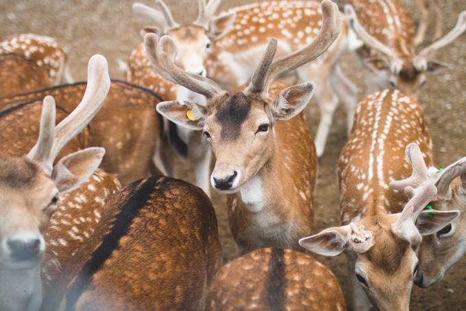 deer park, sandusky, petting zoo