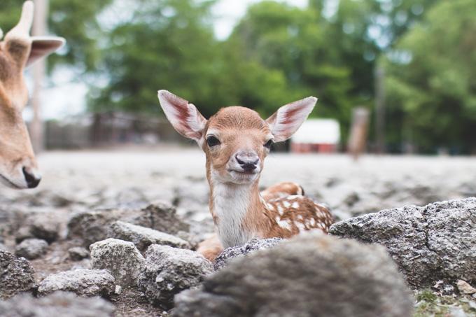 deer park, petting zoo