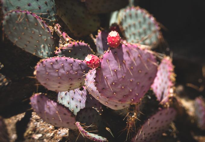 lensbaby, cactus