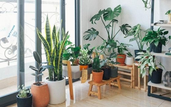 Cute Indoor Plants To Beautify Rooms In Your House Kaynuli