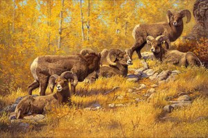 """""""Lords of the Rockies"""" by © K Witherspoon featuring Rocky Mountain Sheep wildlife art"""