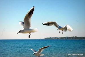 3 чайки танцуют Trap!