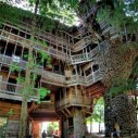 treetop