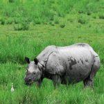 Kaziranga National Park, Kaziranga Rhino, Kaziranga Tour, Kaziranga Hotels Resorts