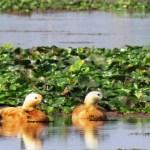 Kaziranga National Park Tour, Kaziranga Birds, Visit to Kaziranga Sivasagar