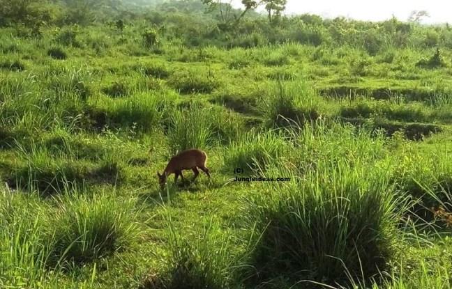 Kaziranga National Park Hotels, Kaziranga National Park Resorts, Kaziranga Safari