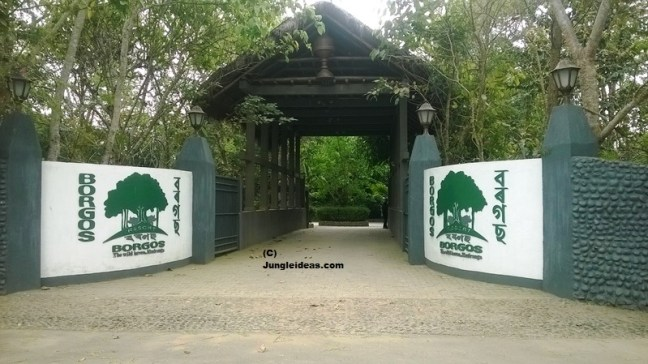 Kaziranga Hotels, Kaziranga Resorts, Kaziranga Lodge, Kaziranga, Kaziranga National Park