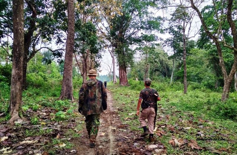Trekking in Kaziranga