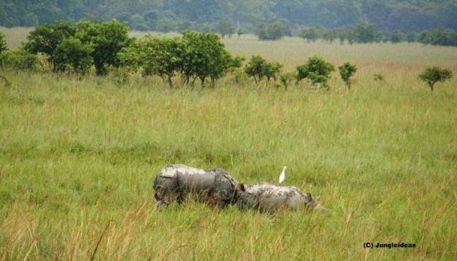 Kaziranga National Park, Kaziranga Safari, Jeep Safari Kaziranga, Elephant Safari