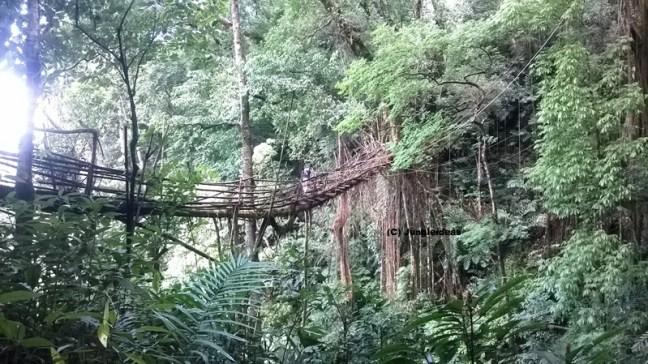 Kaziranga National Park, Pynursla, Mawlynnong, Mawlynnong Homestay, Root Bridge Mawlynnong