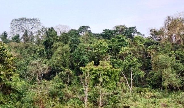Kaziranga National Park, Namdapha National Park, Arunachal Pradesh Tourism