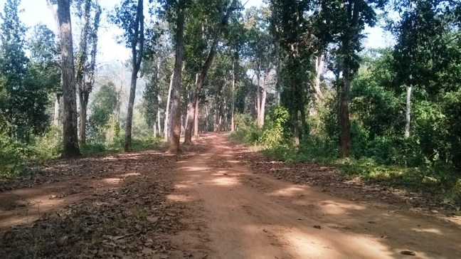 Kaziranga National Park, Assam Tourism, Assam, Assam Tour, Visit Assam