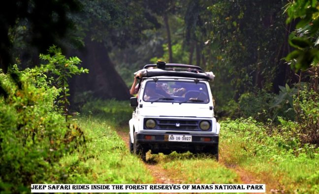 Manas National Park, Manas Safari, Manas Hotels, Manas Resorts, Kaziranga