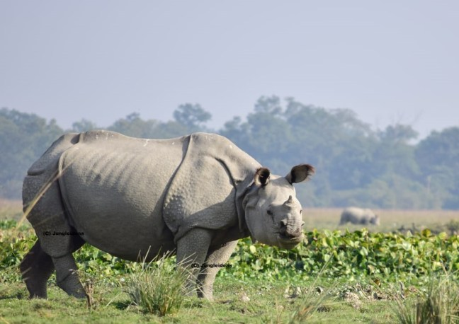 Kaziranga National Park, Kaziranga Safari, Kaziranga Tour, Kaziranga Photography Tour,